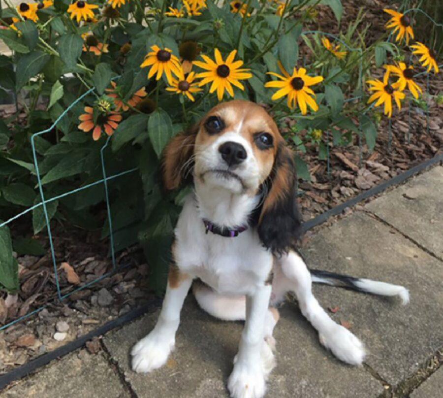 cagnolino davanti fiori