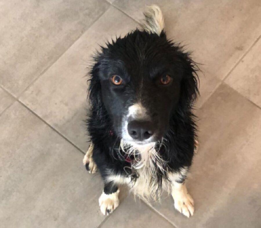 cagnolino seduto bagnato
