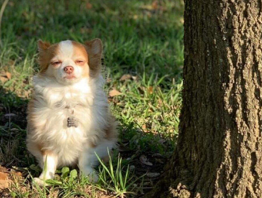 cucciolo di cane vicino albero