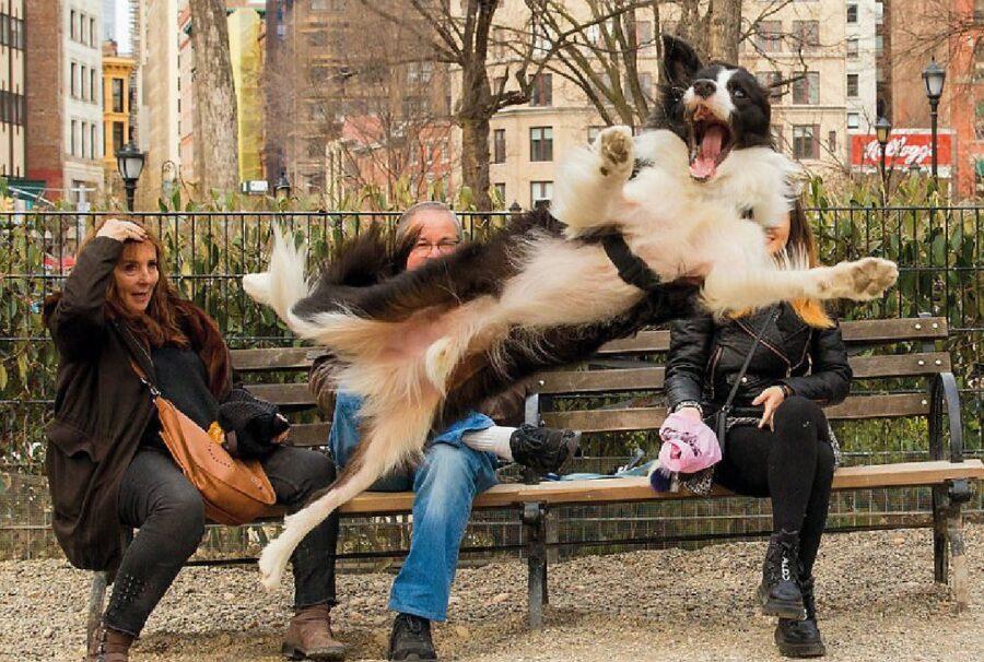 cane border collie salta