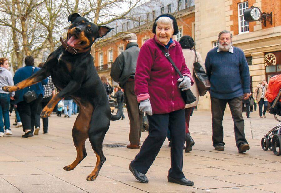 cane che salta sul marciapiede