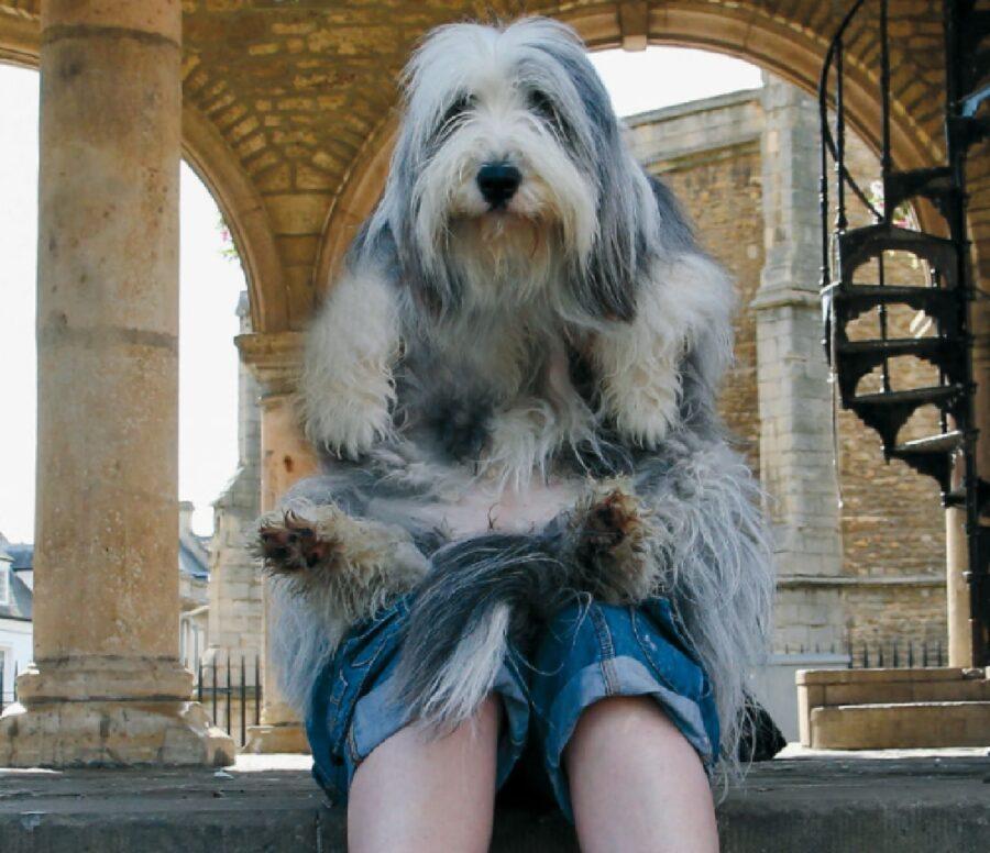 cane sulle ginocchia proprietaria
