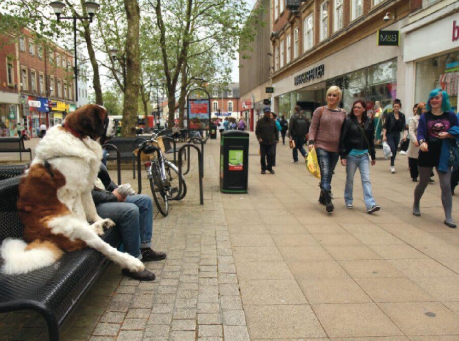 cane sulla panchina riposa