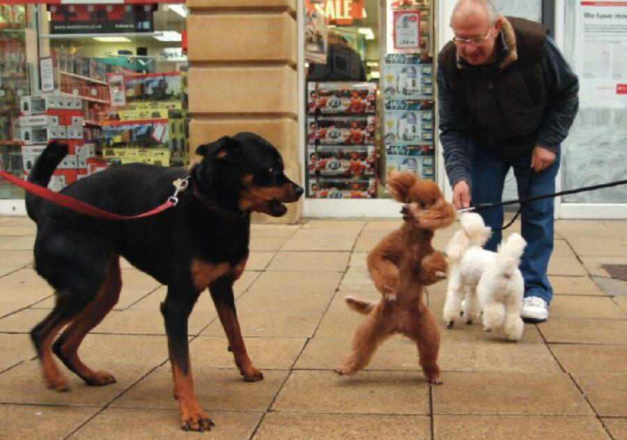 cane lotta con un altro cane