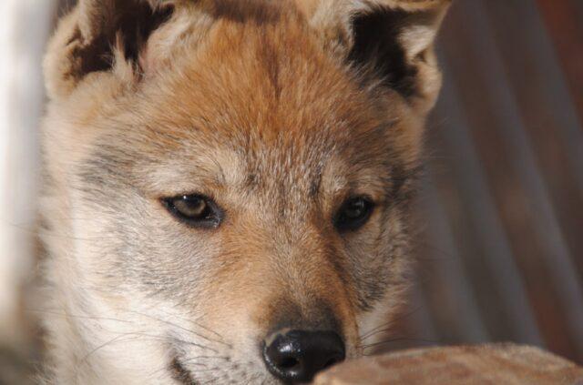 cani che con uno sguardo di condanna