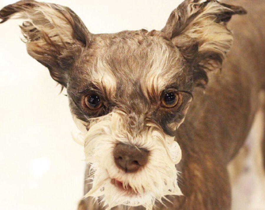 cane arrabbiato per essersi lavato