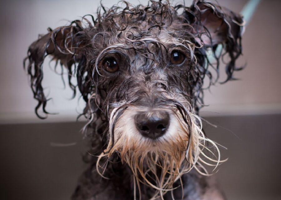 cane dal pelo lungo pulito