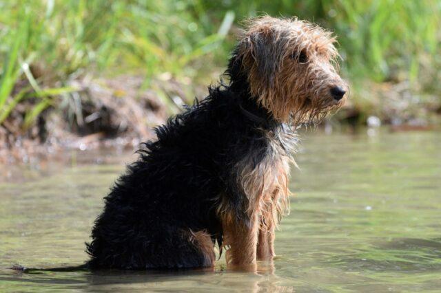 cani puliti e profumati dopo essere usciti vasca