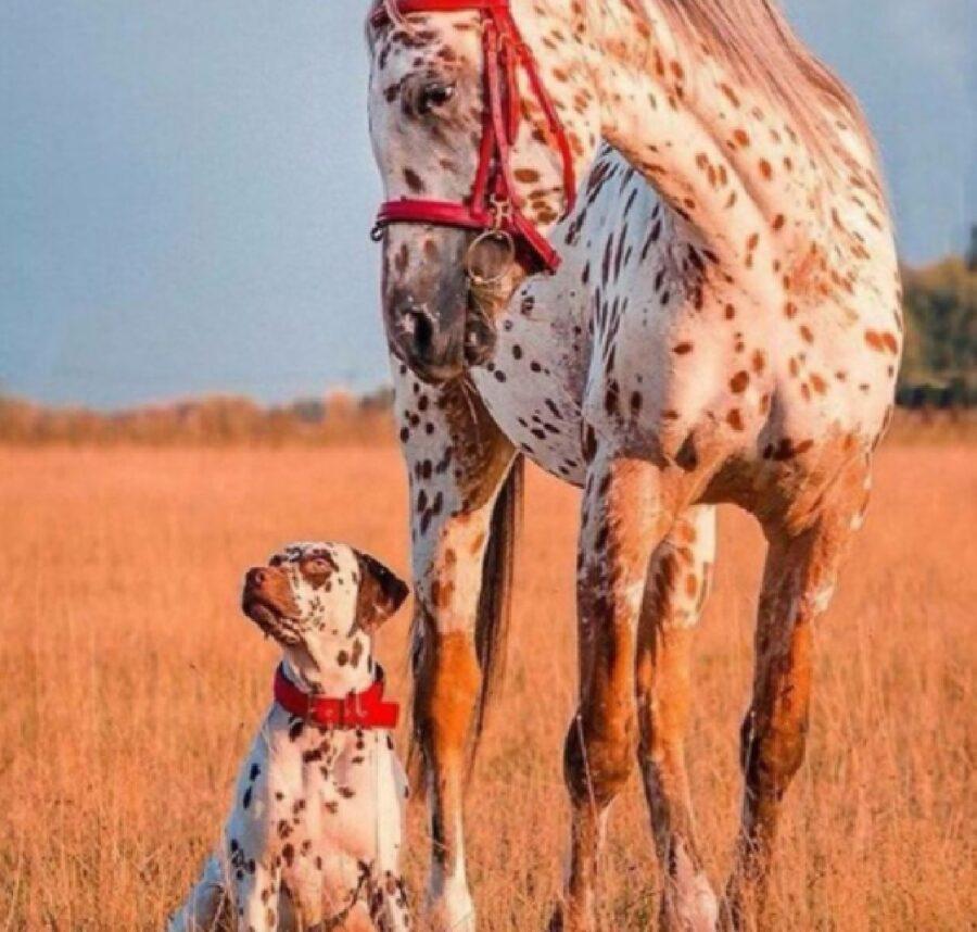 cane e cavallo rosso e arancione