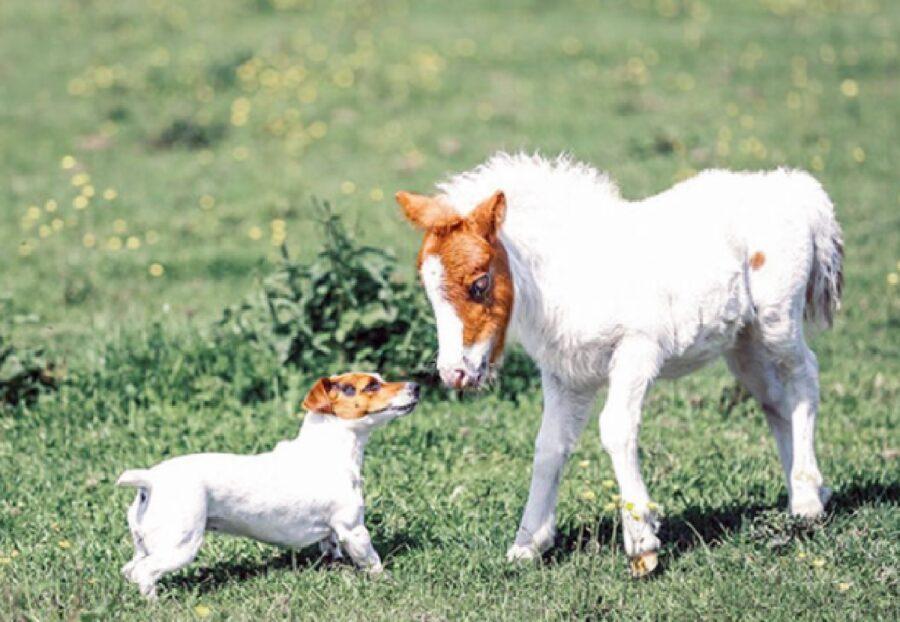 cane con piccolo cavallo