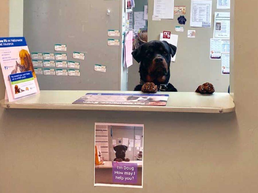 cane dietro bancone reception