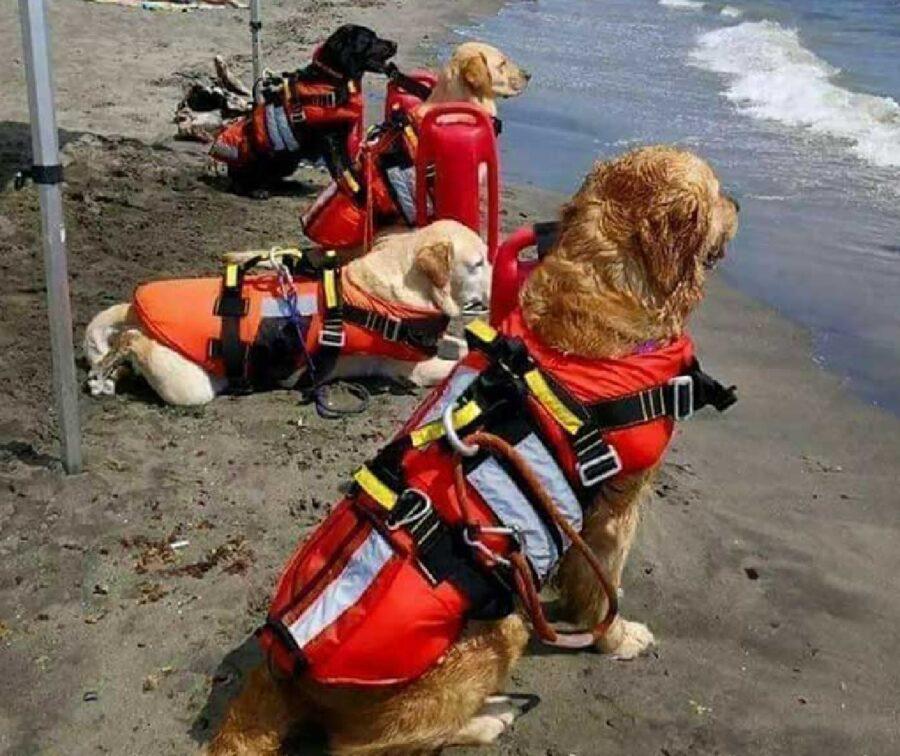 cani squadra salvataggio mare