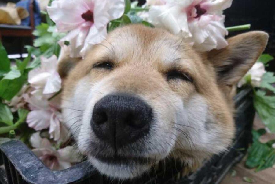 cucciolo dorme sui fiori