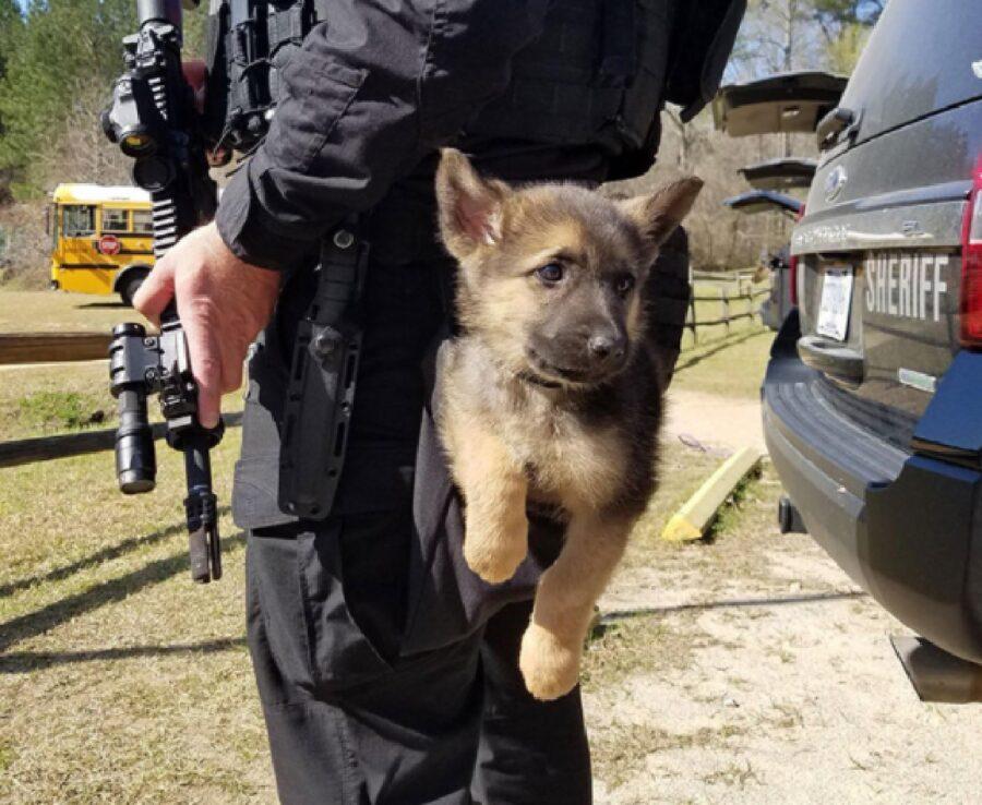 cucciolo impara dal poliziotto