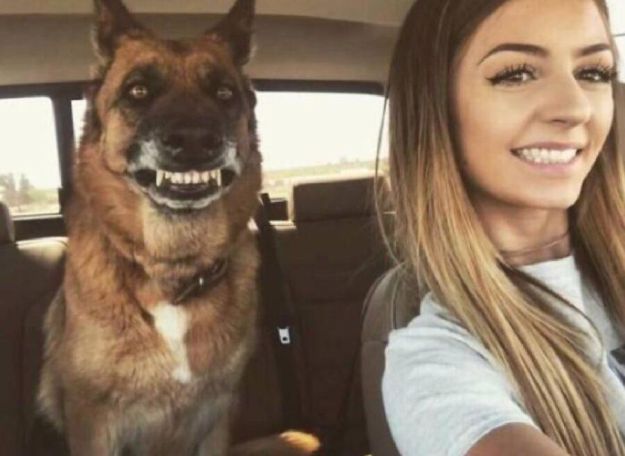 cane pastore tedesco sorride