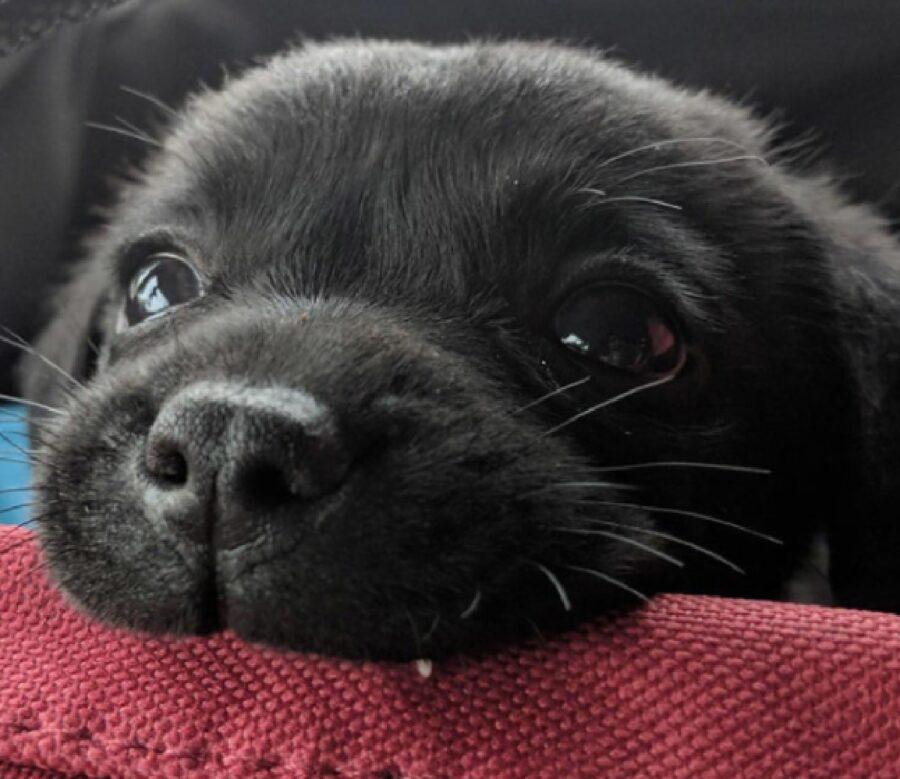 cucciolo ha un solo dente