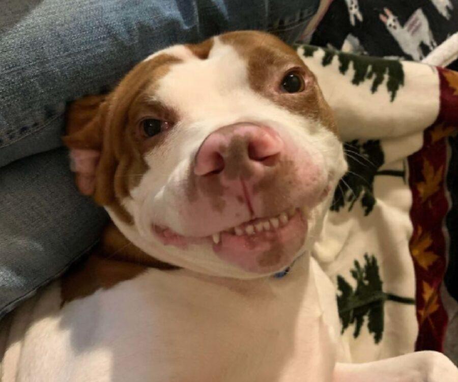 cane sorride con denti