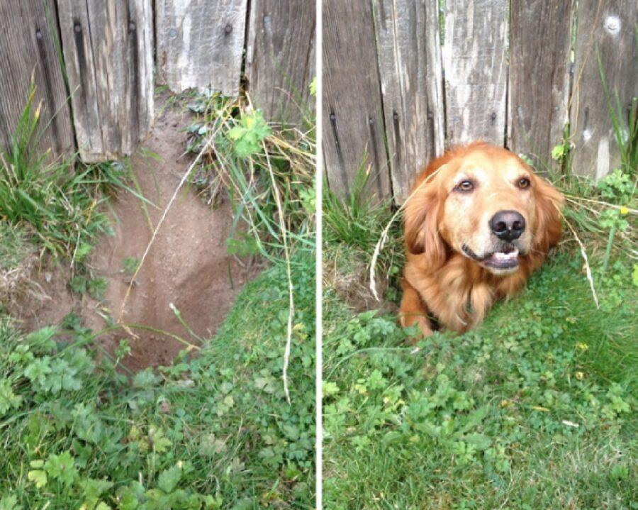 cane passa sotto buco