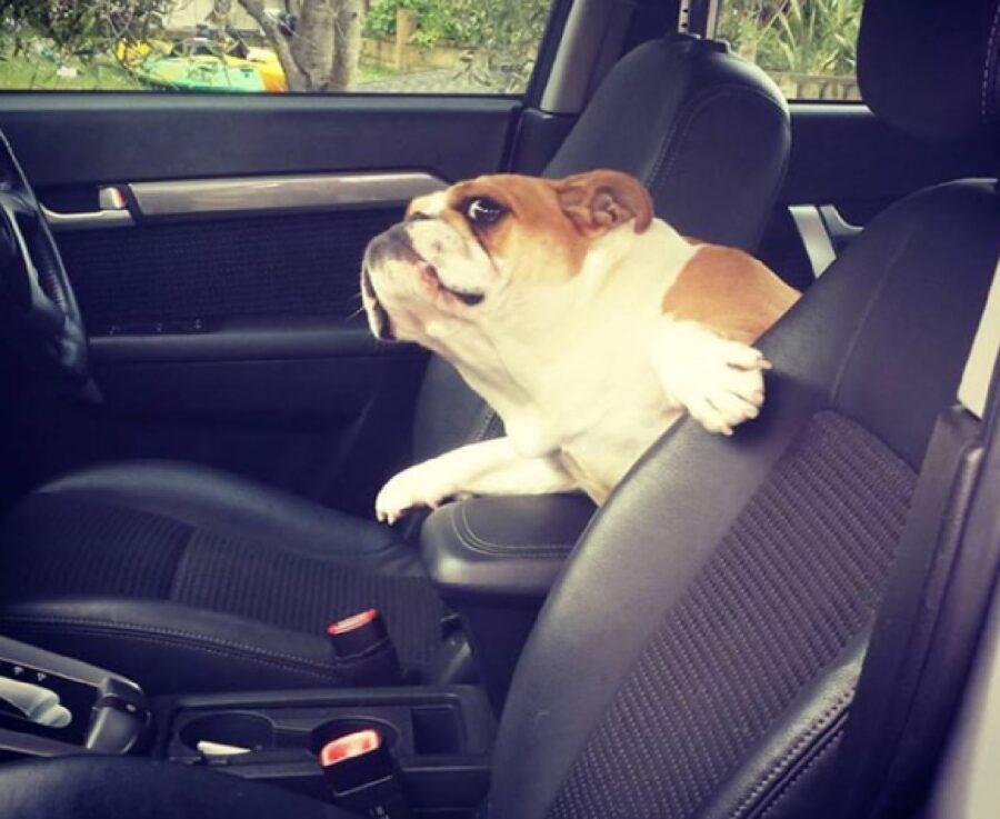 cane si affaccia sedili anteriori