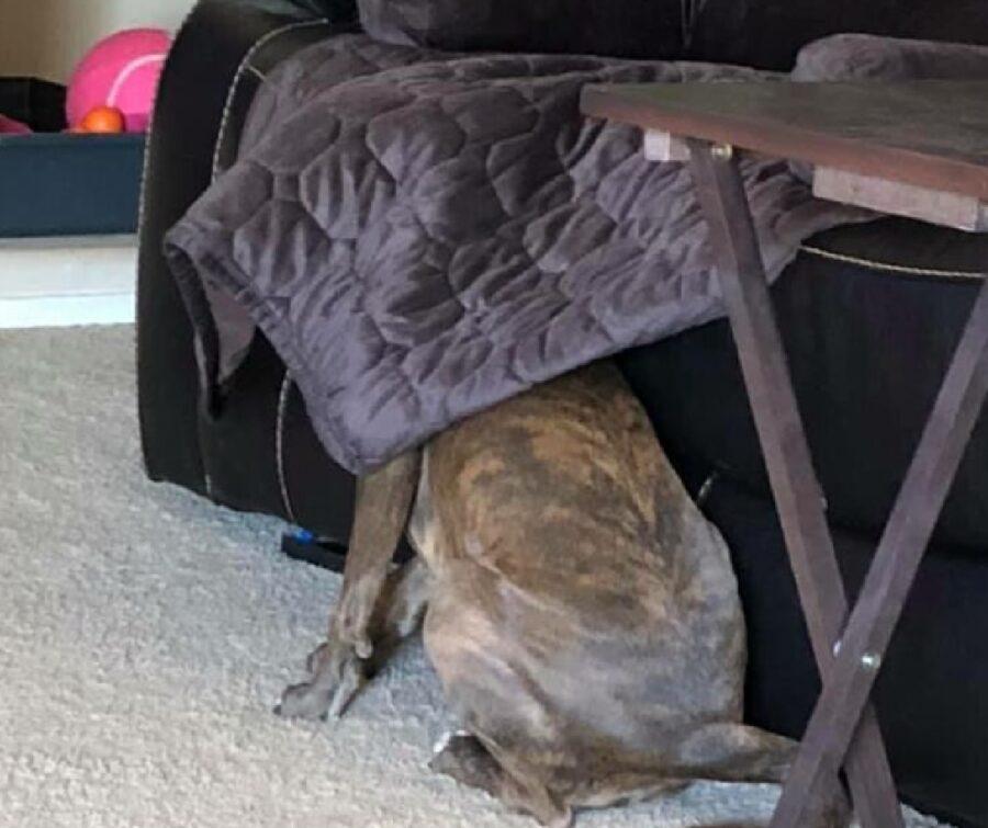 cane nero nascosto coperta divano