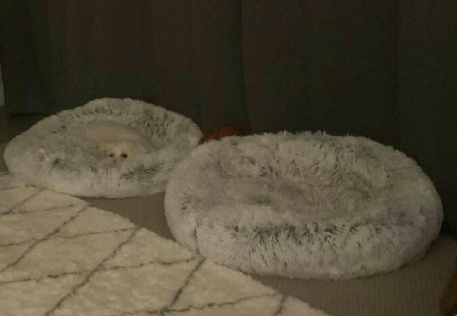 cane dentro cuccia grigia chiaro