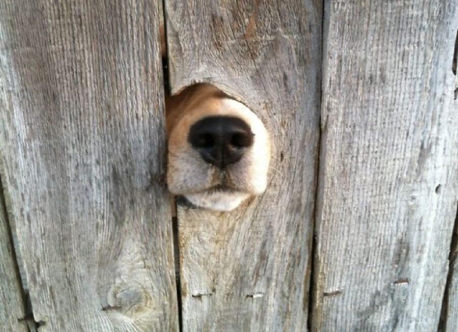 cane spunta fuori naso