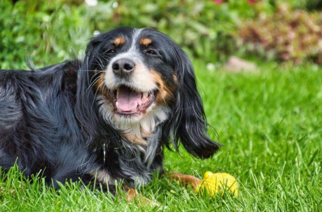cani che rimangono bloccati per salutare