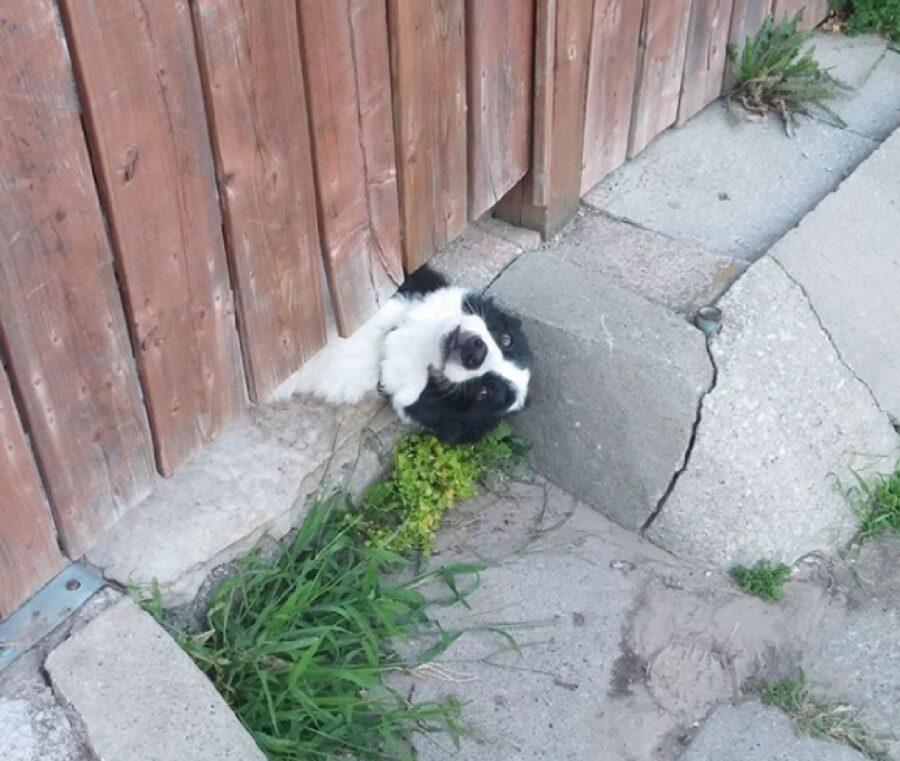 cucciolo testa all'in su