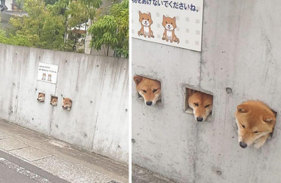 cani fori nel muro di cemento