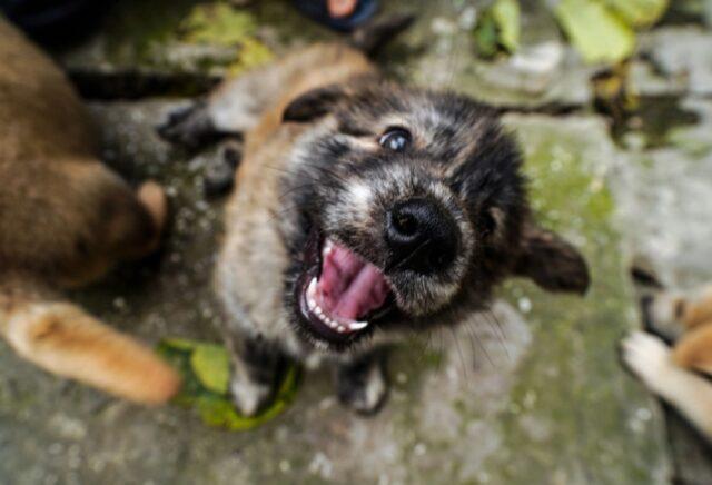 cani che sentono il bisogno di dire ciao