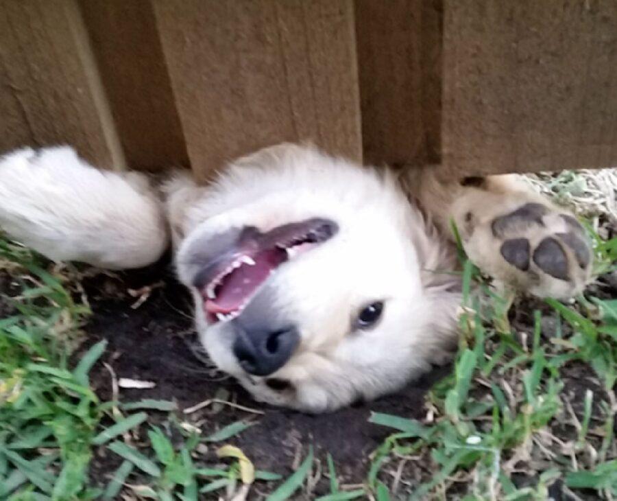 cagnolino felice di vedere umano