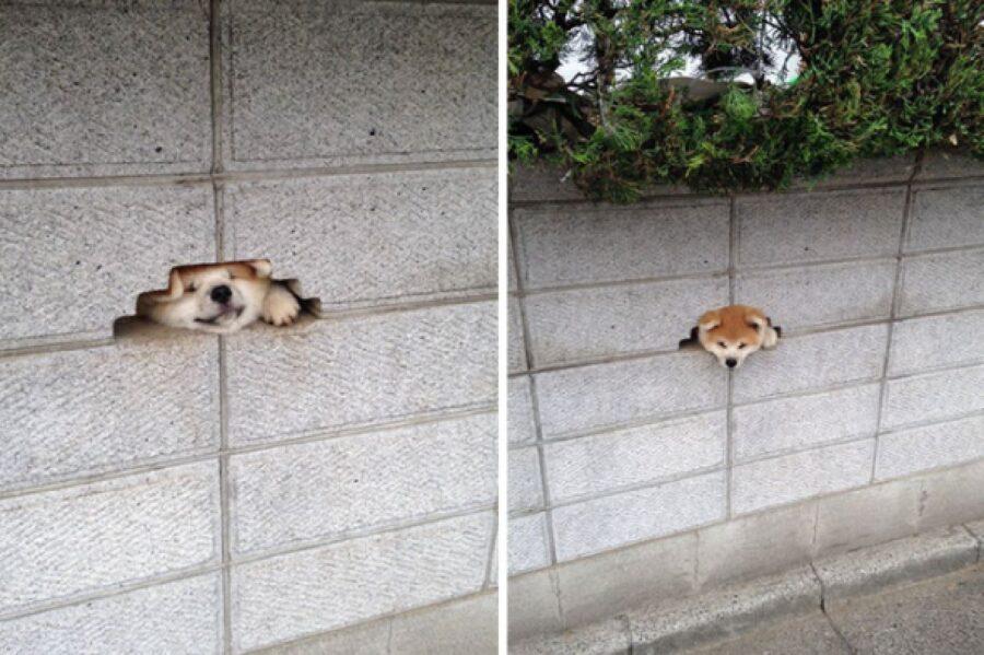 cane esce da piccolo buco nel muro