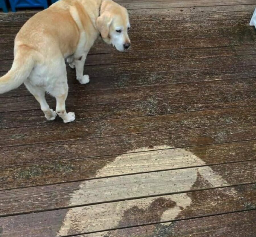 cane lascia traccia sul pavimento
