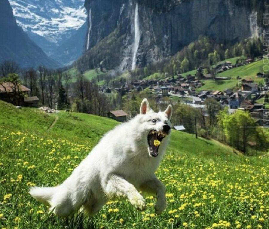 cane rovina foto panoramica