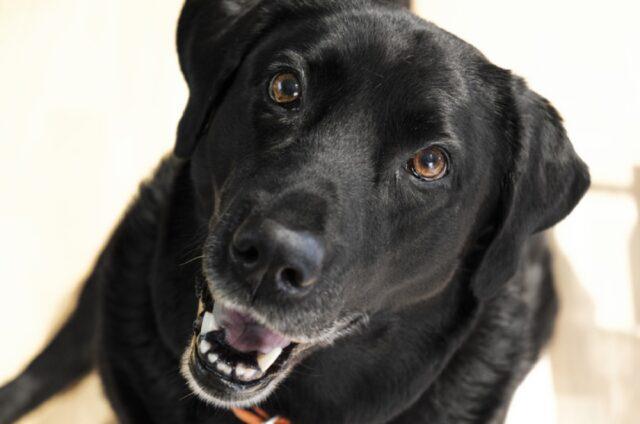 cani che possono sorprendere in ogni momento