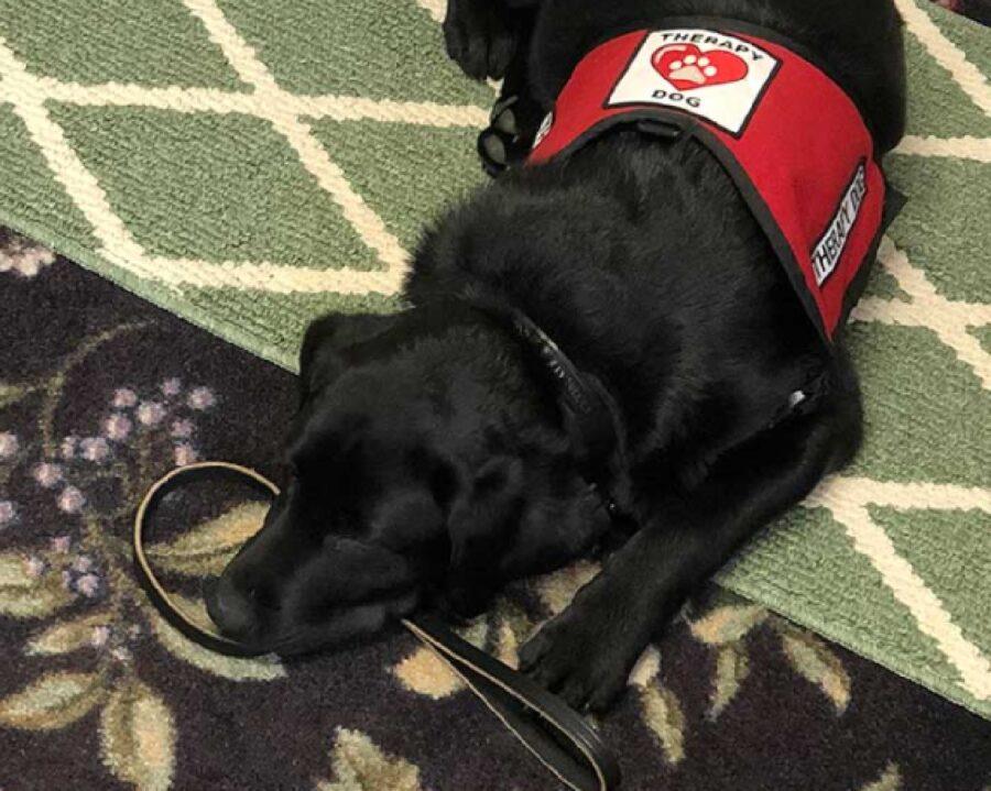 cane da terapia dorme