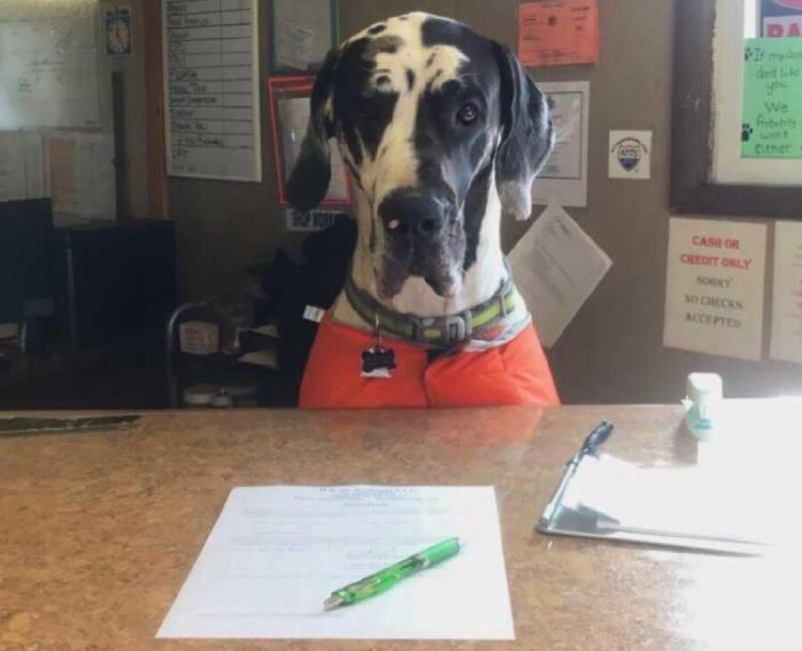 cane assistenza clienti