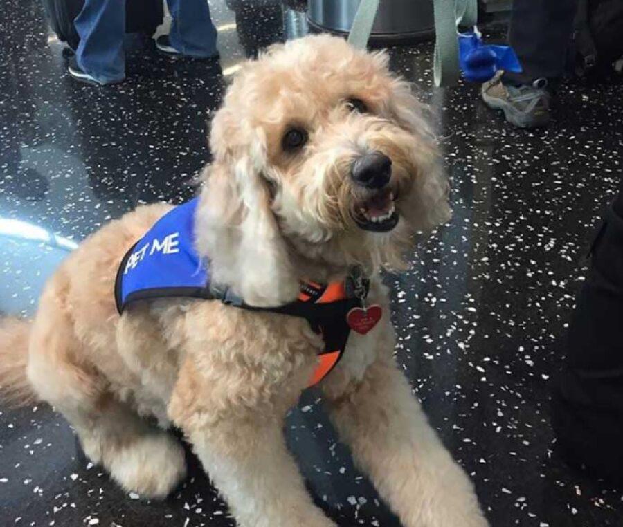 cane pet therapy aeroporto