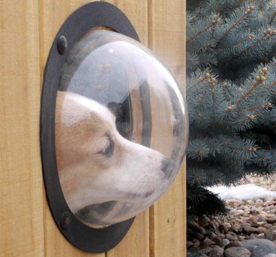 cane finestra esterna cuccia