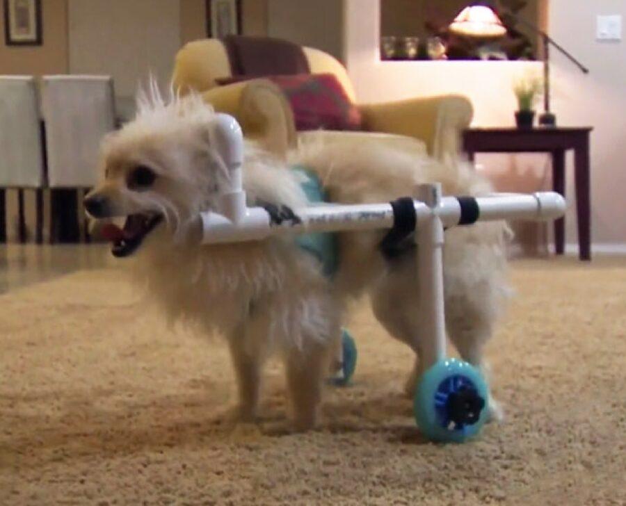 cagnolino invenzione per muoversi