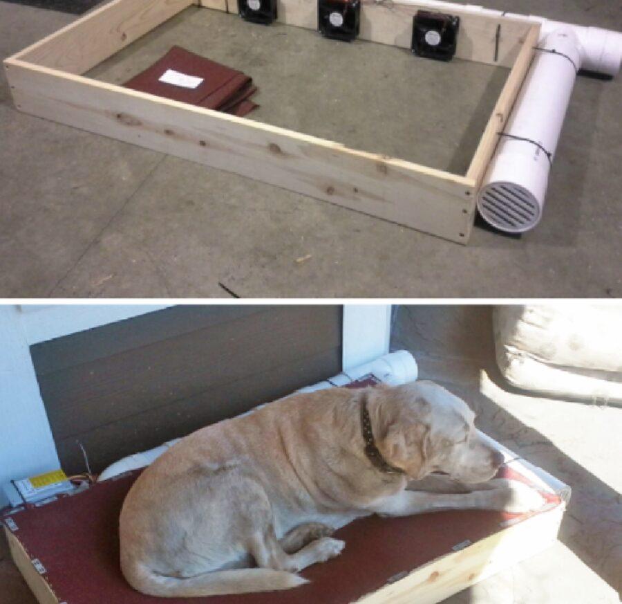 cane con cuccia ventilata