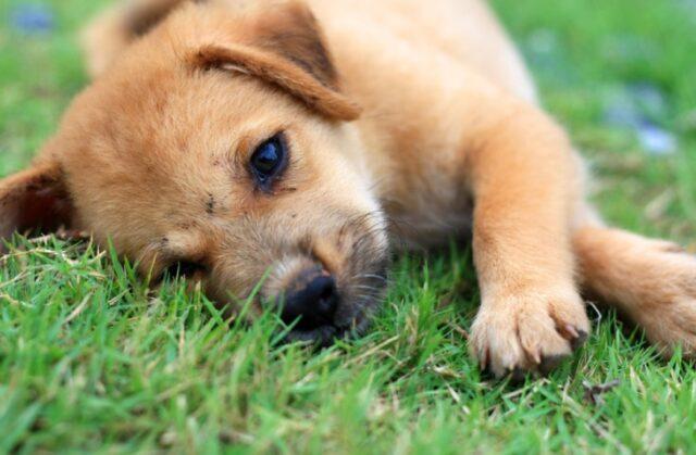 cani che vogliono dormire ovunque