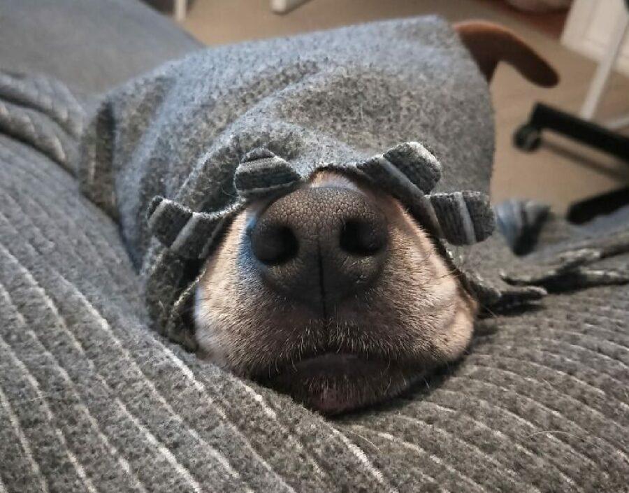 cane naso esce coperte