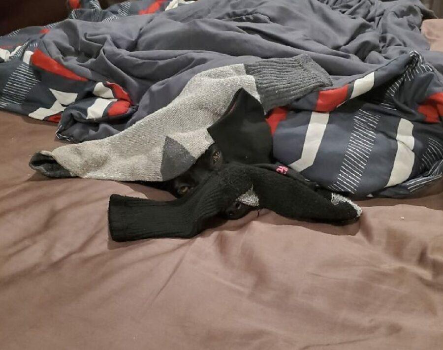 cane sotto mucchio di vestiti