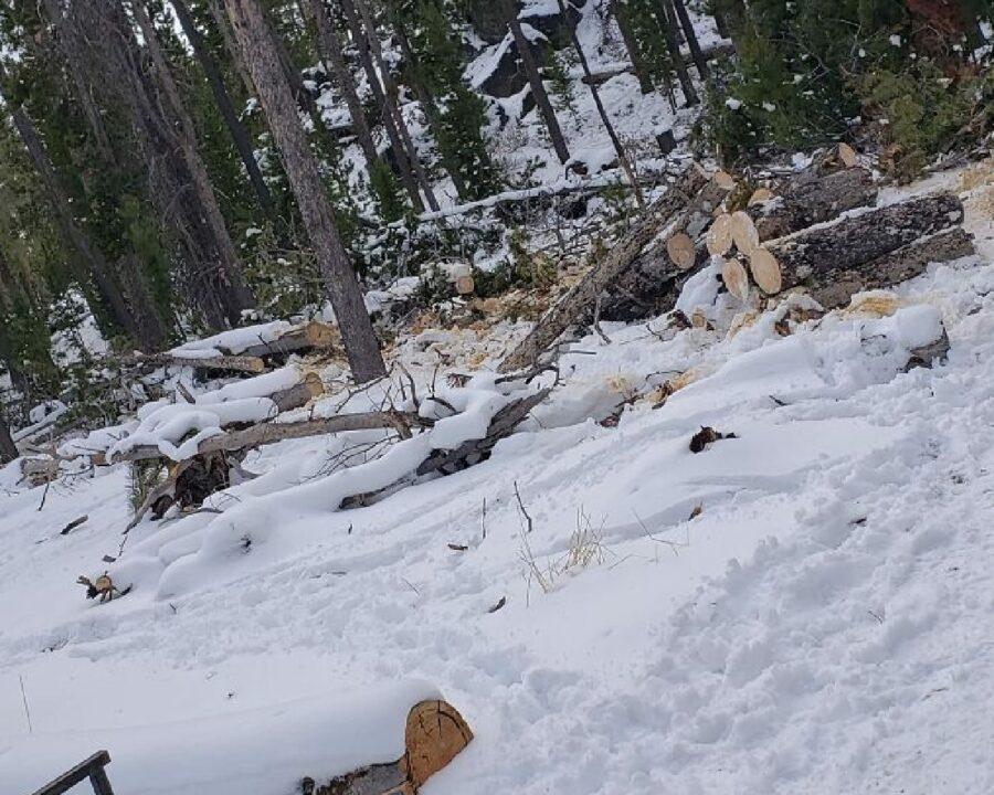 cucciolo di cane nascosto neve