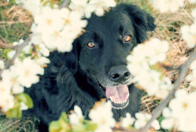 cani che adorano giocare sempre a nascondino