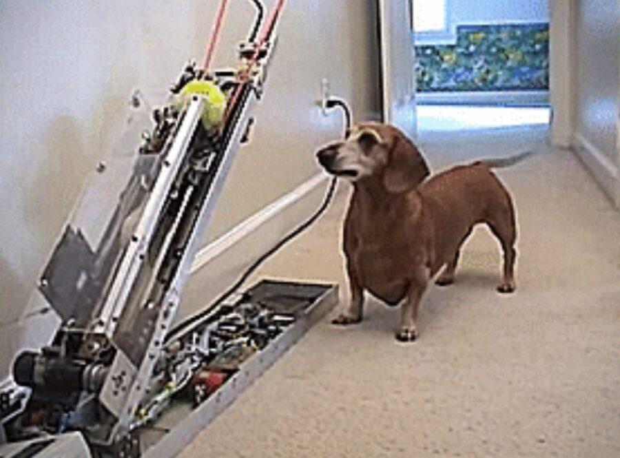 cagnolino macchinario lancia palline