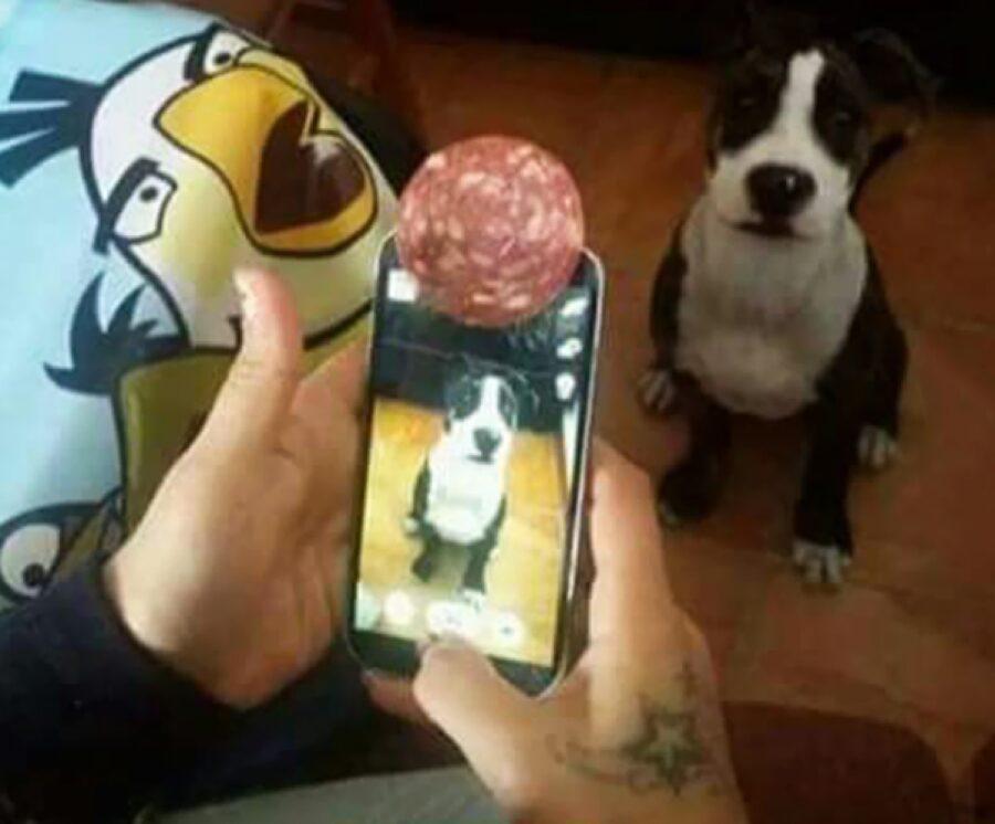 cane rimane fermo per foto