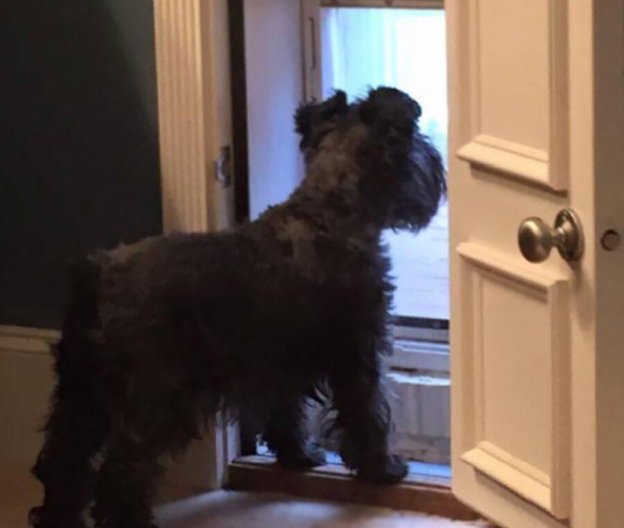 cane porta aperta piccola
