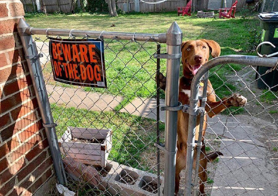 cane gioia di vedere amico